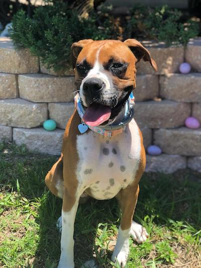 Nala Pet of the Month May 2019